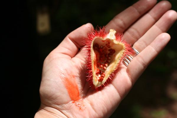 La ferme aux épices de Zanzibar - Poulette Blog